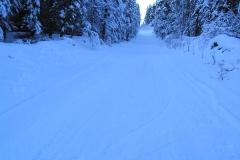 McLean Lake Trail - February 2006